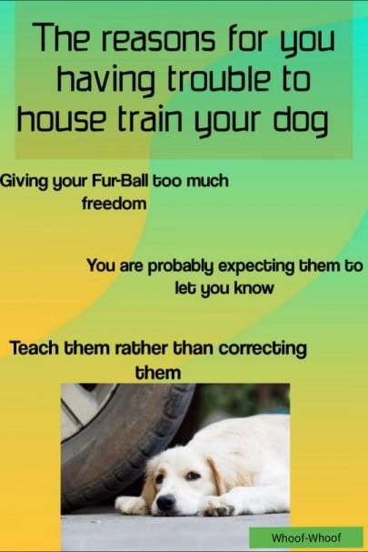dogs, dog care, dog lover,dog health, dog breed