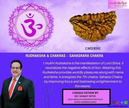 One Mukhi Rudraksha