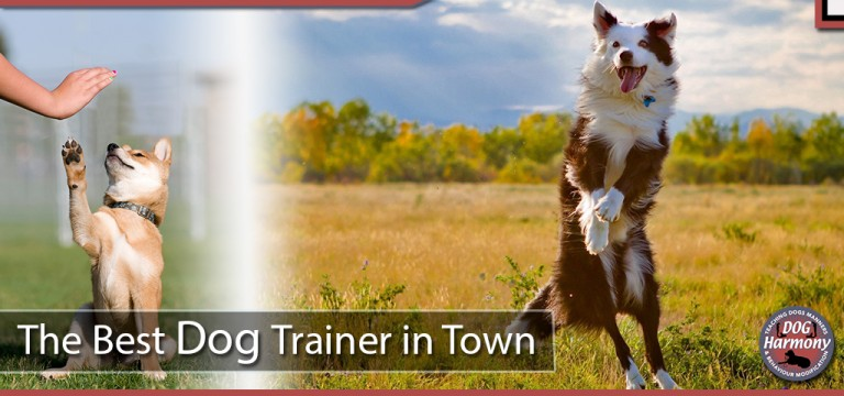 The Best Dog Trainer in Town