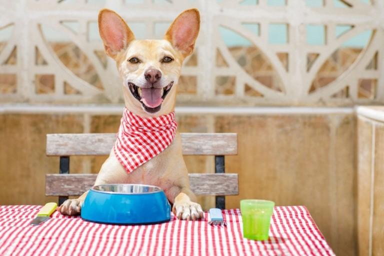 pet friendly restaurants in Scottsdale