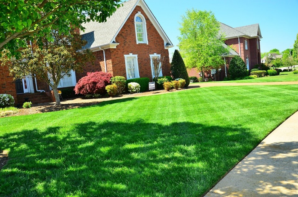 professional landscaping service in Tampa