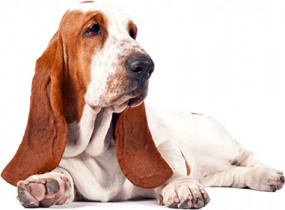Dog rescue, dog shelter, dog care, dog
