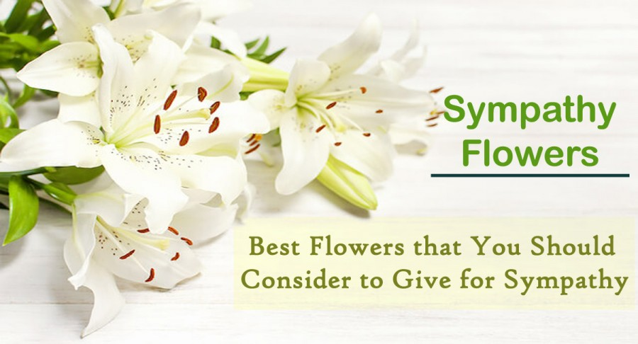 sympathy flowers- Best Flowers that you should consider to give for Sympathy