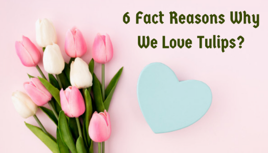 6 Fact Reasons Why We Love Tulips